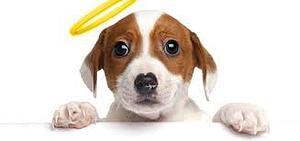 Dog Problem Behaviour
