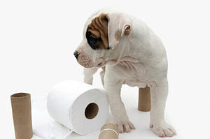 potty training puppy