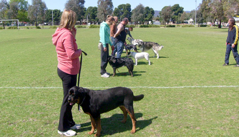 group-classes-dogtrainingla